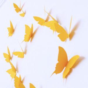 envolée de papillon jaune trendy little