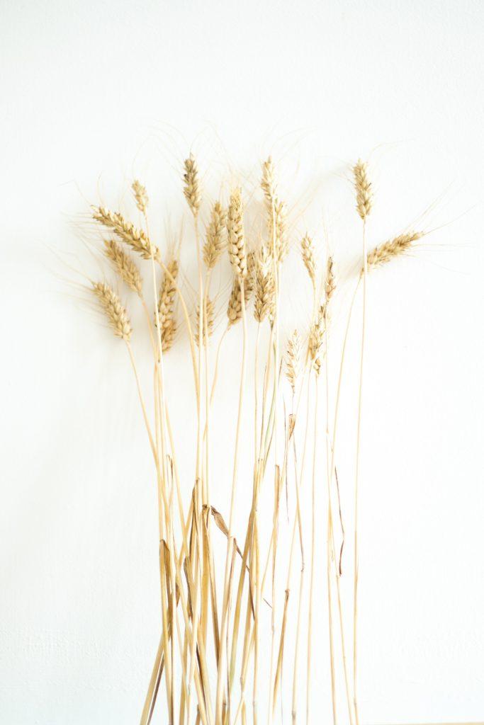 Brins de blé dans l'atelier Trendy Little