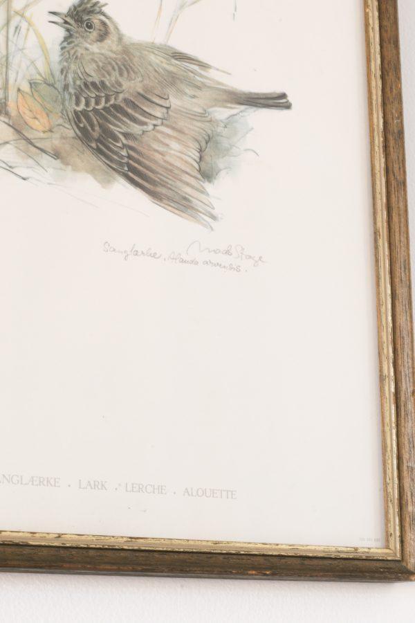 Illustration enfant, sérigraphie d'Alouette dans les hautes herbes, oeuvre de Mads Stage imprimé au Danemark. Vendu par Trendy Little.