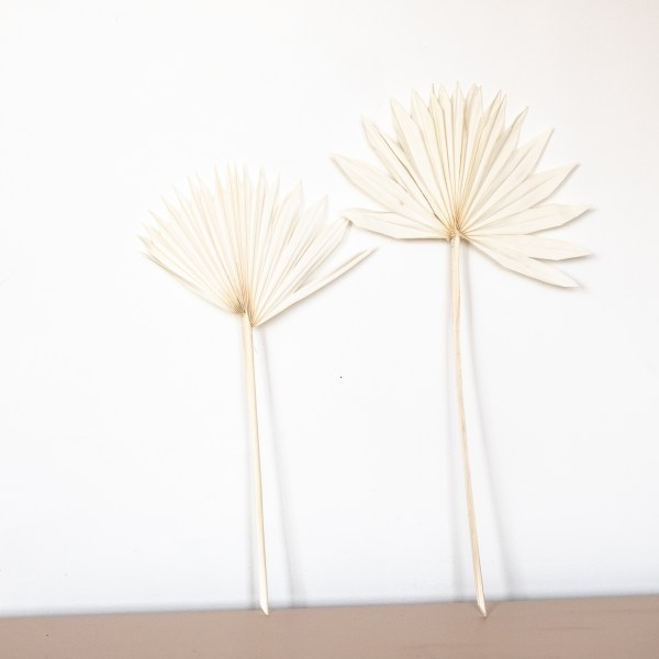 Feuille de palme séchée blanche Trendy Little